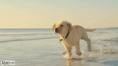 Video Marley and Me