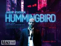 Suppl Hummingbird