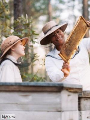 Suppl The Secret Life of Bees