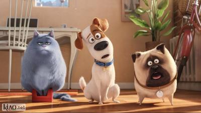 Video The Secret Life of Pets