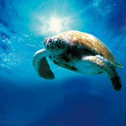 Image Turtles - The incredible Journey