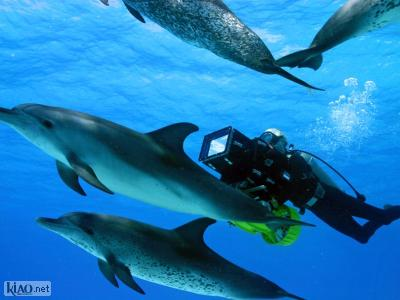 Extrait OceanWorld 3D