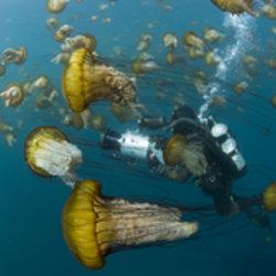 Image Oceans