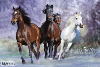 Video Horses