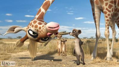 Video Animals United