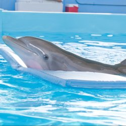 Image Dolphin Tale