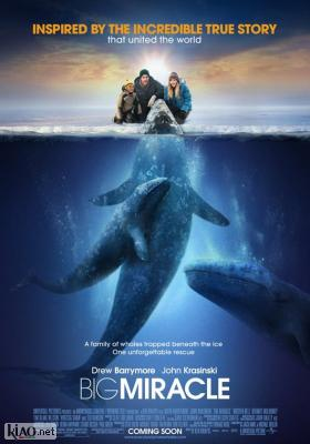 Poster_uk Big Miracle